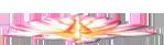 Лотос-розовый